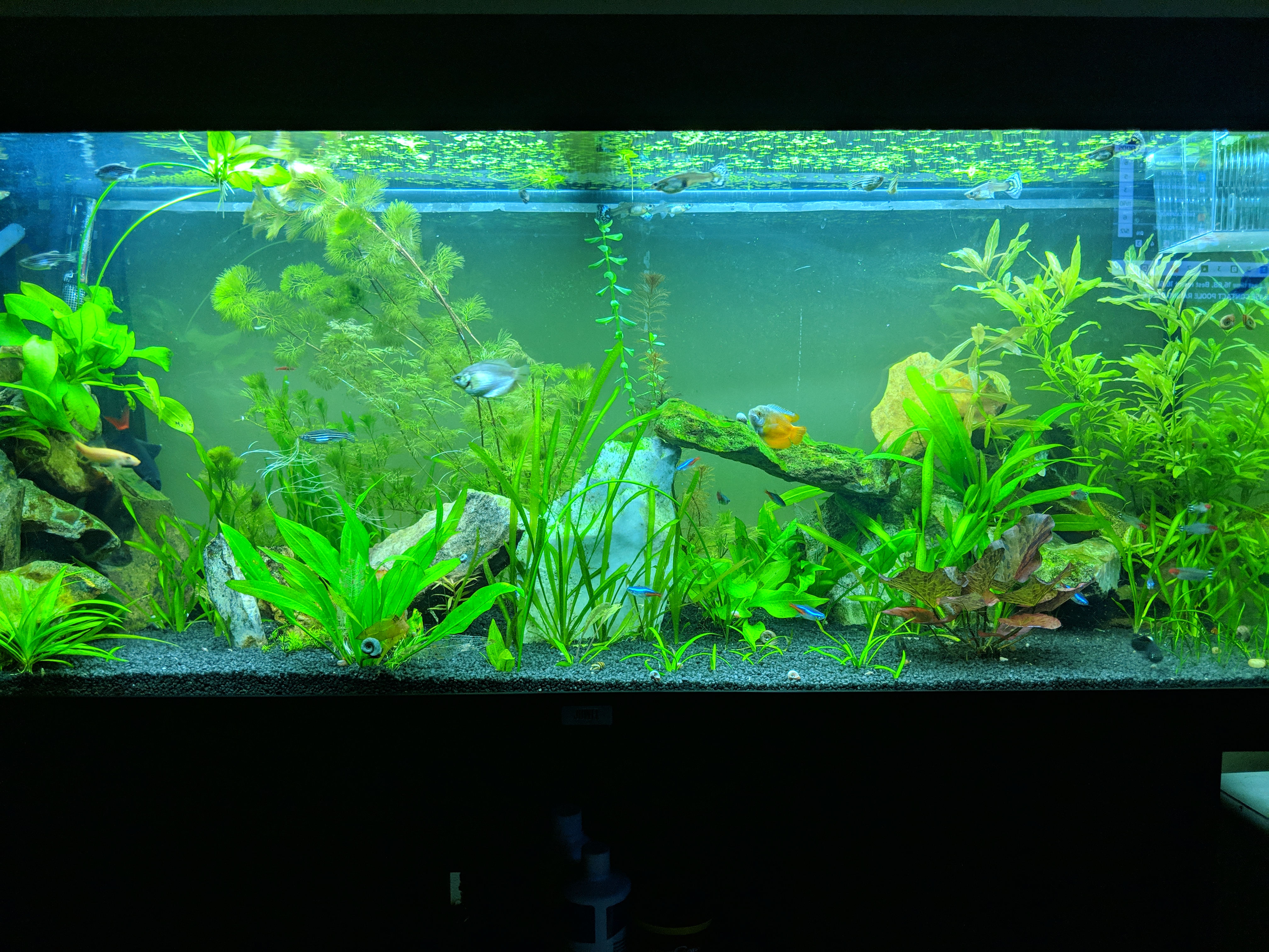 Planted Tropical Tank