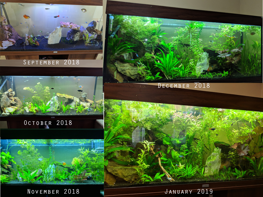 Tropical Fish Tank Progression
