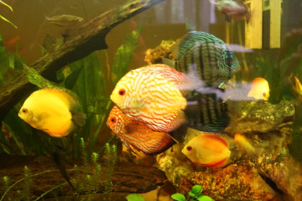 School of Discus
