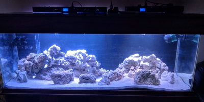 Marine tank Feb 12th 2019