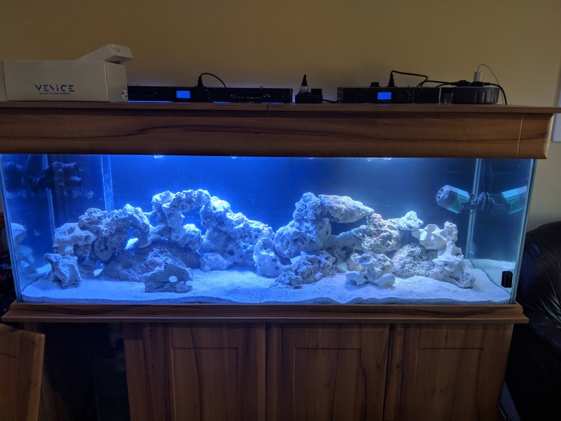 Saltwater Tank 3rd March 2019