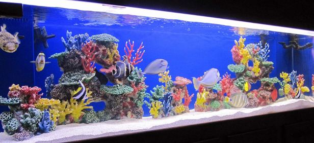 Fish Only With Artificial Reef