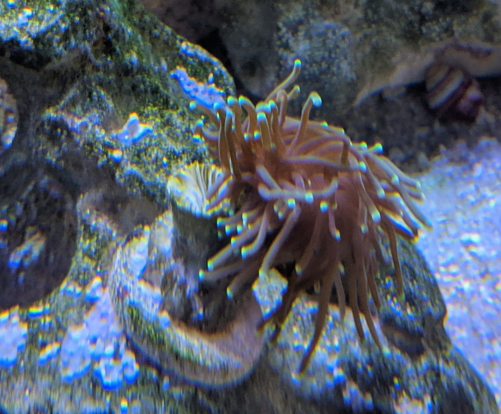 Torch Polyp bail out
