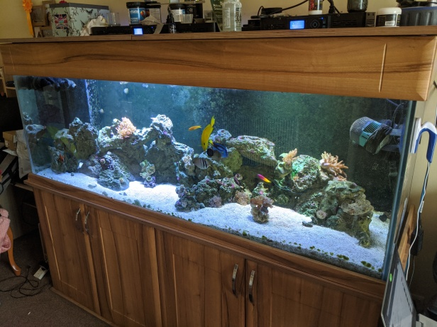Saltwater Tank 16th March 2020