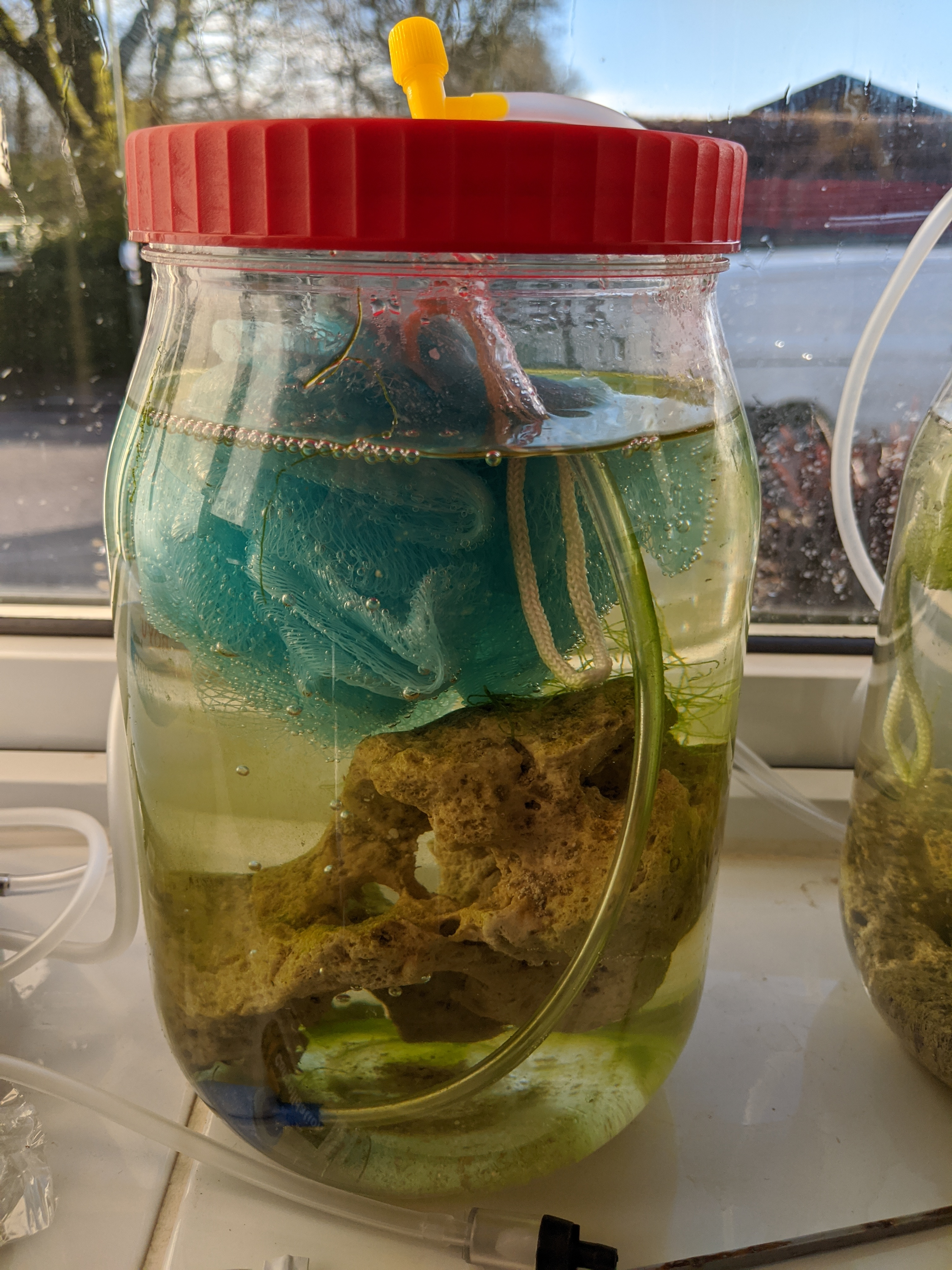 DIY Copepod Culture