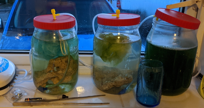 Copepod Culture at Home
