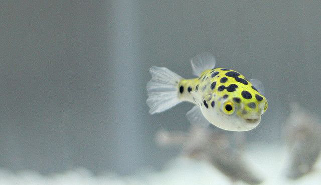 How To Set Up Your Own Brackish Fish Tank