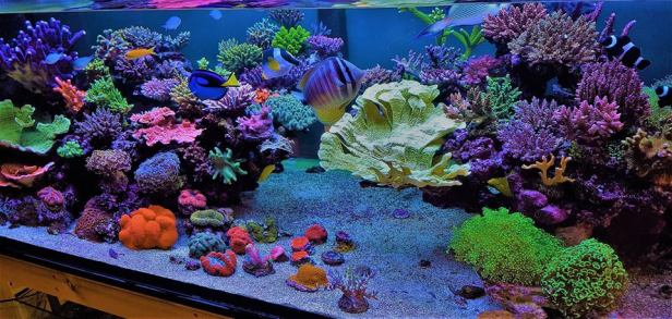 Mixed Reef Tank