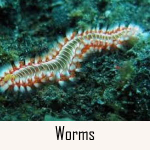 Worms Category